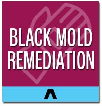 black mold remediation long island