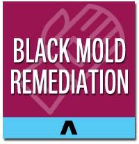 black mold remediation long island
