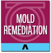 mold remediation long island